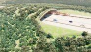 Ganador del Tramo 5 del Tren Maya se anunciará a fines de agosto